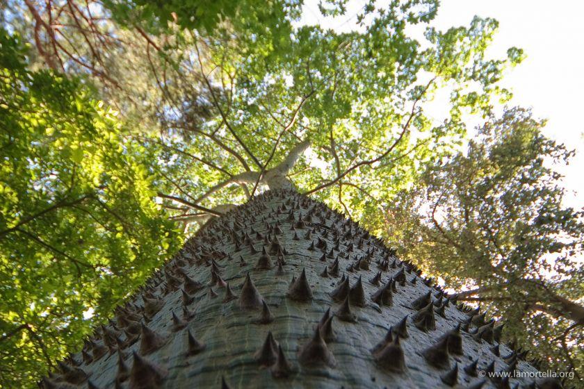 gli-alberi-03