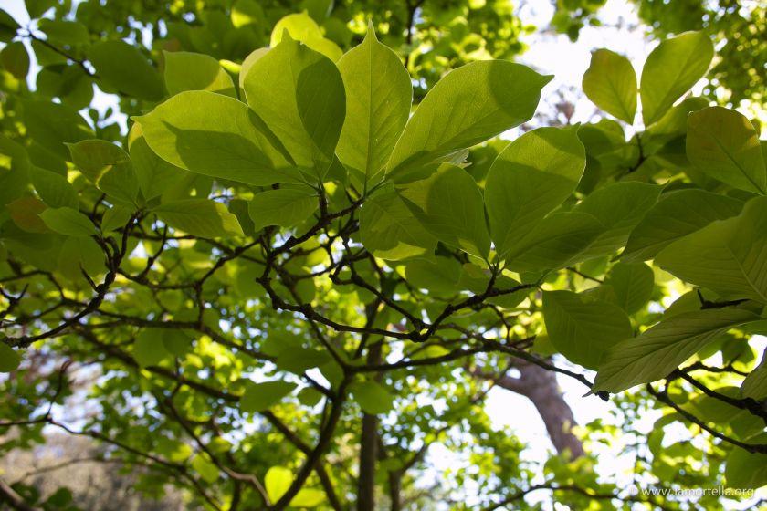 gli-alberi-08