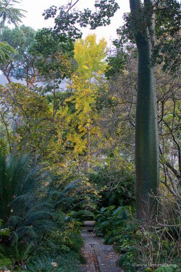 gli-alberi-19