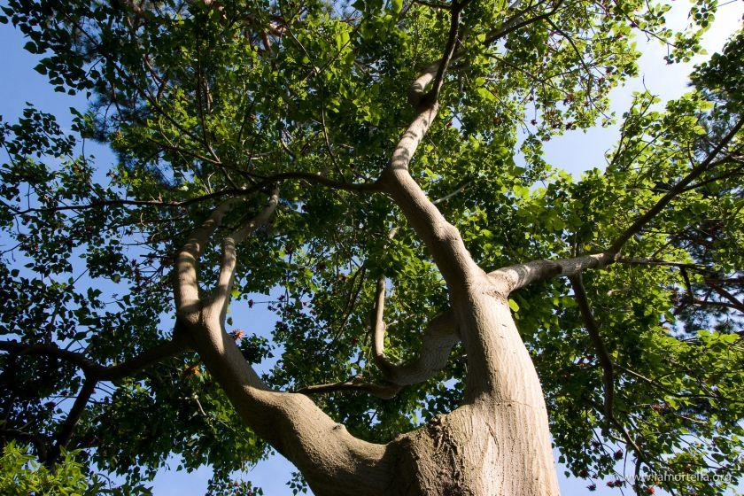 gli-alberi-41