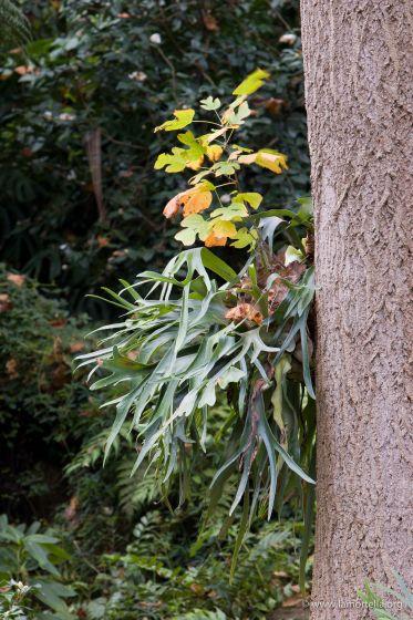 liriodendron-ed-epifite-18