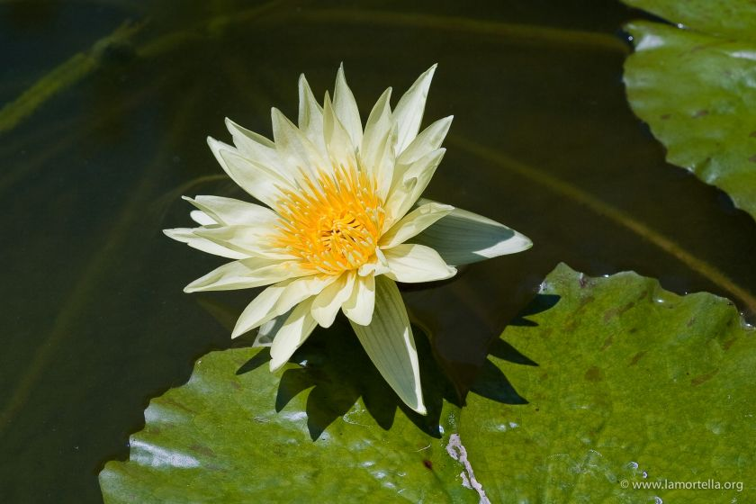 piante-acquatiche-07
