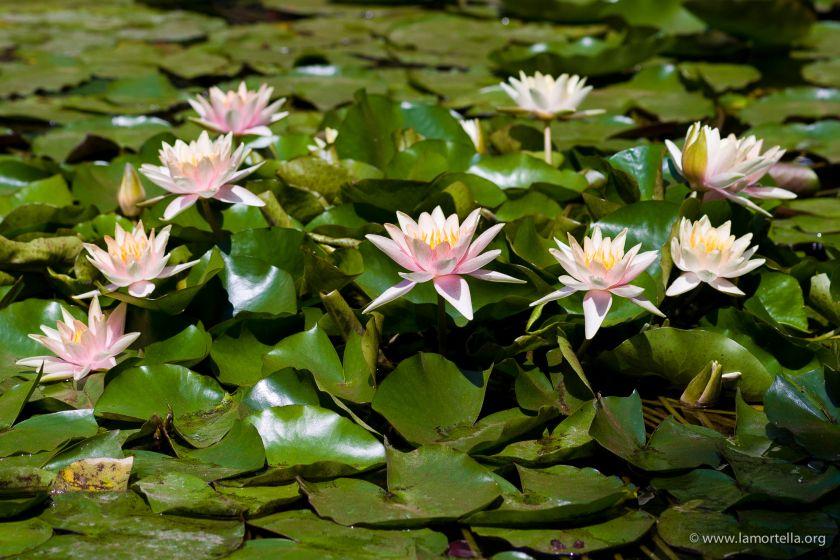 piante-acquatiche-09