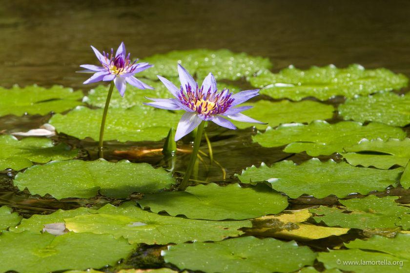 piante-acquatiche-28