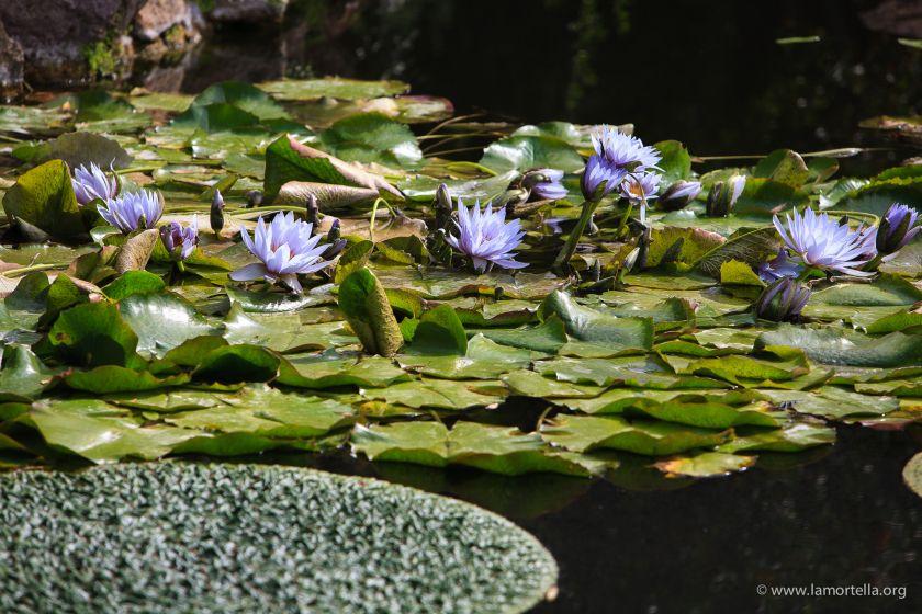 piante-acquatiche-36