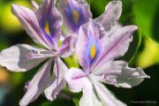 piante-acquatiche-01