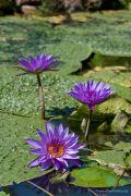 piante-acquatiche-11