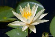 piante-acquatiche-15