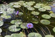 piante-acquatiche-18