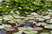 piante-acquatiche-30
