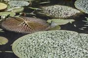 piante-acquatiche-37