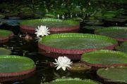 piante-acquatiche-39