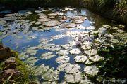 piante-acquatiche-40